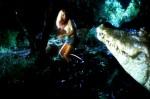 crocodile-2000-01-g