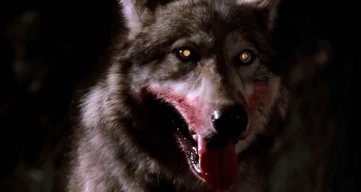 страшные волки фото