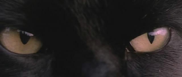Черный кот фильм 2014